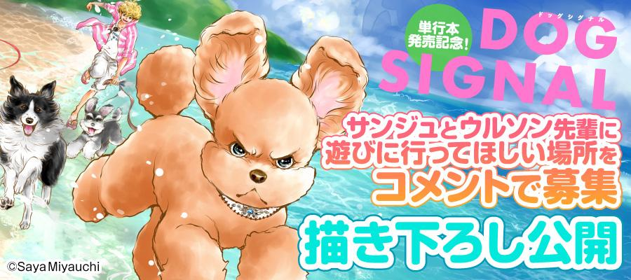 BRIDGE_DOG_結果.jpg